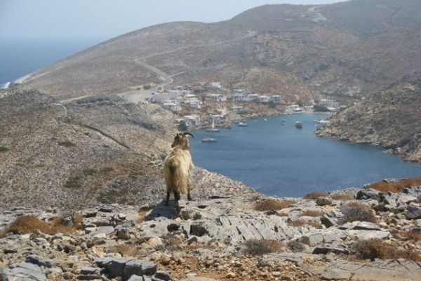 Illustration du billet Sifnos, nous insistons